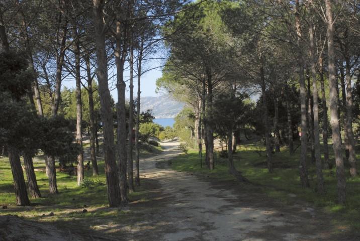 Sardegna - Villaggio Camping Spiaggia del Riso - Viale Alberato