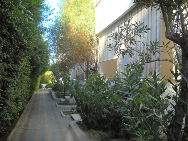 Sellia Marina - Villaggio La Fenice - Viale Interno