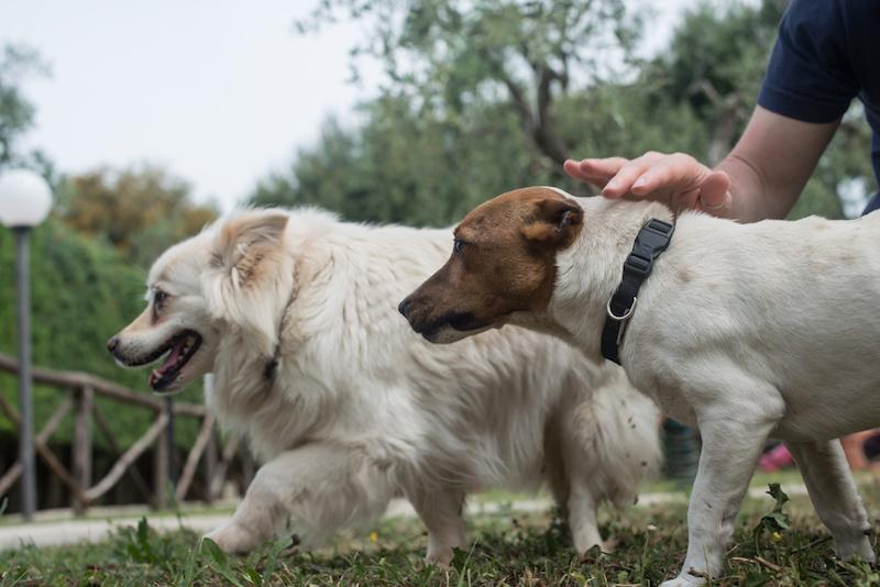 Cani accettati - Palme Gemelle Vieste
