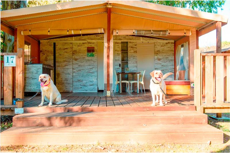 Dog-Friendly Lodge Tent
