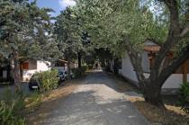 Vibonati - Elayon Club Residence -Viale alberato